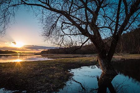 bare tree during sunrise