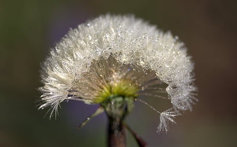 bokeh photography of dandelion
