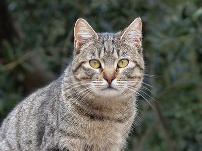 brown tabby cat photograph