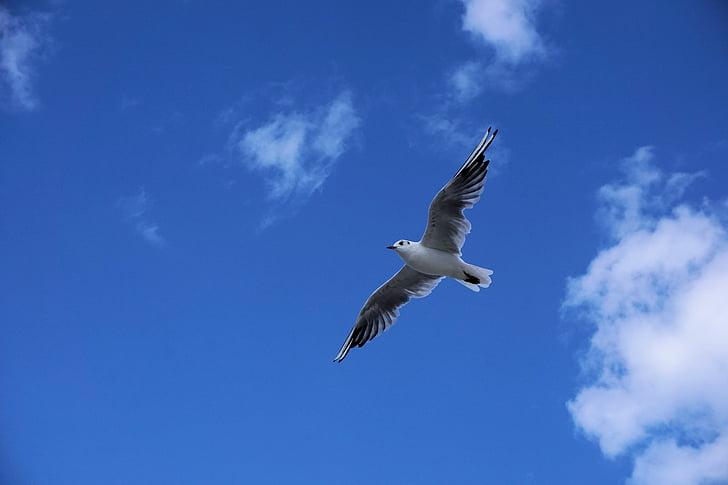 white and black flying bird on sky