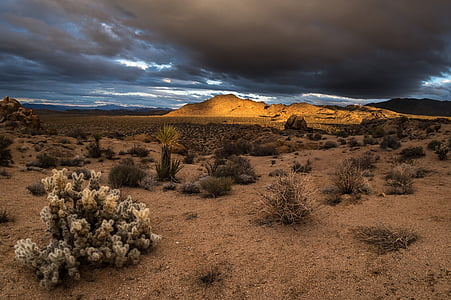 landscape photography of desert under nimbus clouds