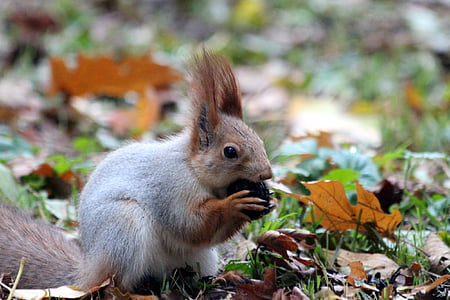 gray and brown squirrel