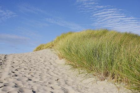 white sand beside green grasses