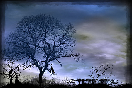 silhouette of cat on leafless tree