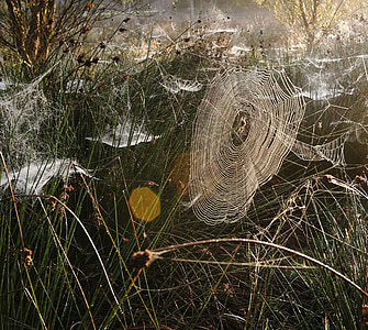 grass with spider webs