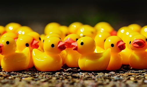 rubber duck lot