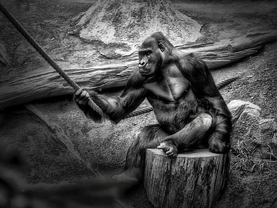 gorilla holding rope grayscale photography