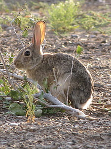 grey rabbit near tree branch