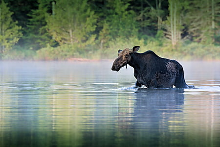 black animal on water