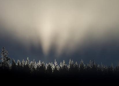 trees under gray sky