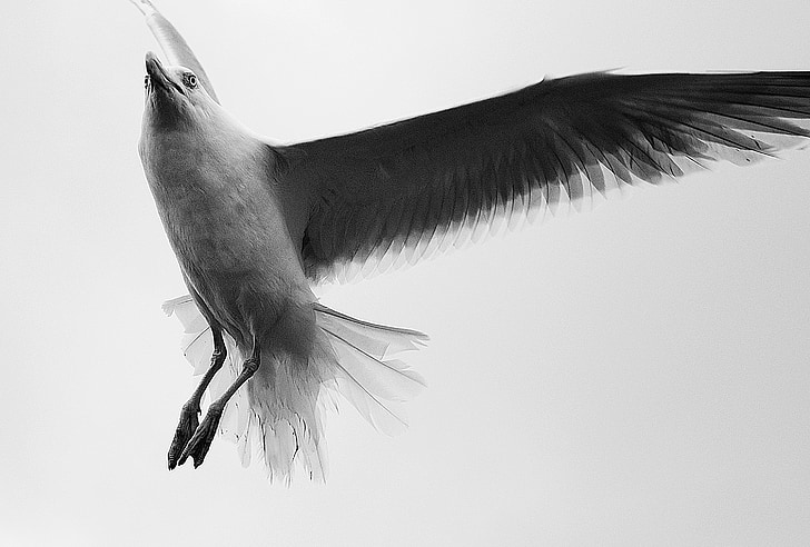 grayscale photography of flying bird