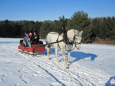 group of people riding on red sleigh and white horse during daytime