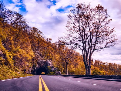 photo of a road between trees