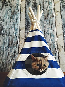 brown cat inside the blue and white mini tent
