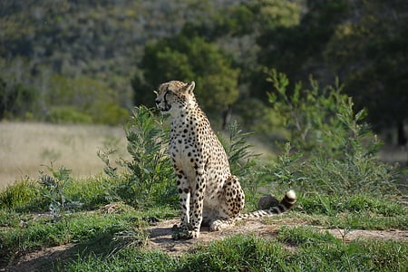 Cheetah sitting on ground