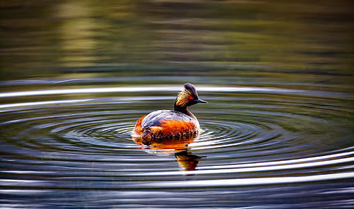 duck swimming on body of water
