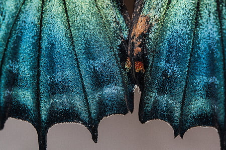photo of blue and green glitter textile