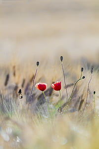 two red petaled flowers in selective-focus photography