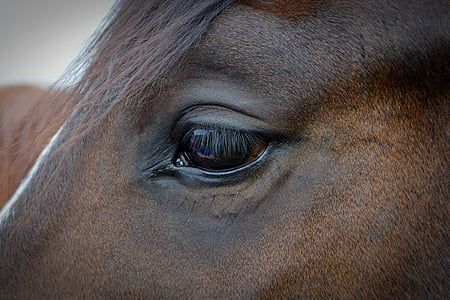 view of horse eye