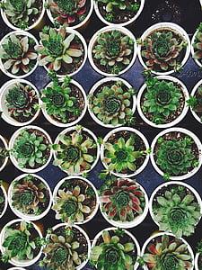 organize pile of green succulent plants