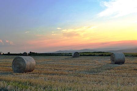brown hay on grass field
