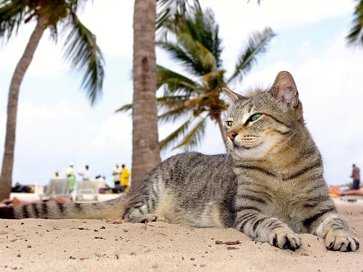 gray tabby cat lying on white sand