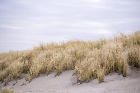 brown grass during daytime
