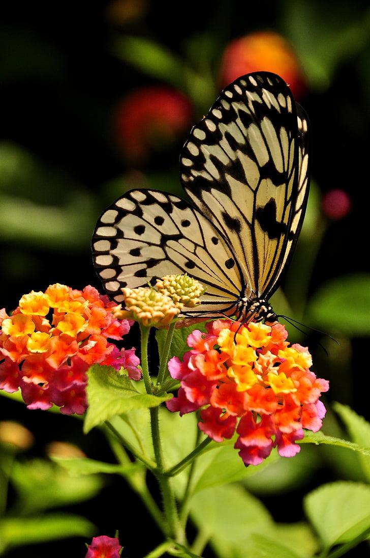 Royalty free photo paper kite butterfly on orange petaled flowers paper kite butterfly on orange petaled flowers mightylinksfo