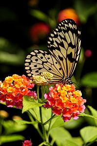 paper kite butterfly on orange petaled flowers