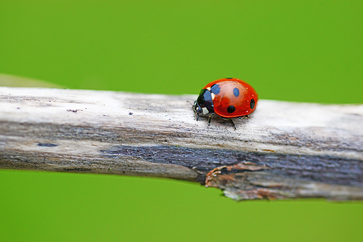 ladybird on tree branch