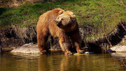 brown bear on body of water during daytime