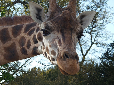 giraffe near trees