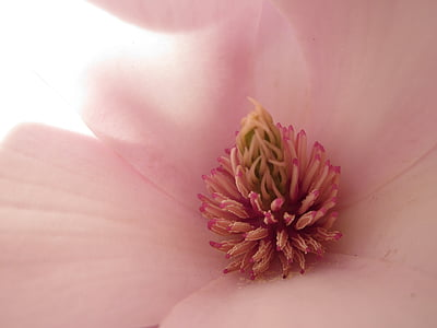 macro photography of pink petaled flower