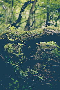 close up photo of moss on wood branch