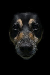 photo of black and brown dog