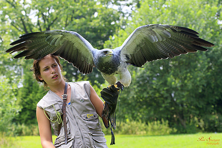 woman holding eagle during daytime