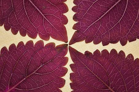 four purple leaves photo