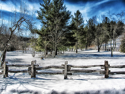 brown wooden fence near trees at daytime