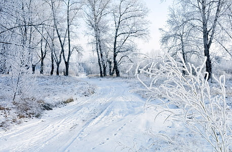 snow covered road and trees