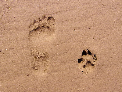 paw and foot on the sand