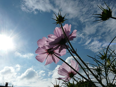 low angle photography of pink petaled flower under the sun