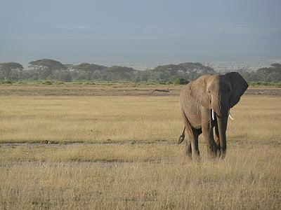 brown elephant walking daytime