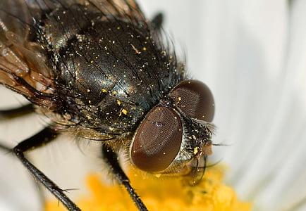 closeup photo of black fly
