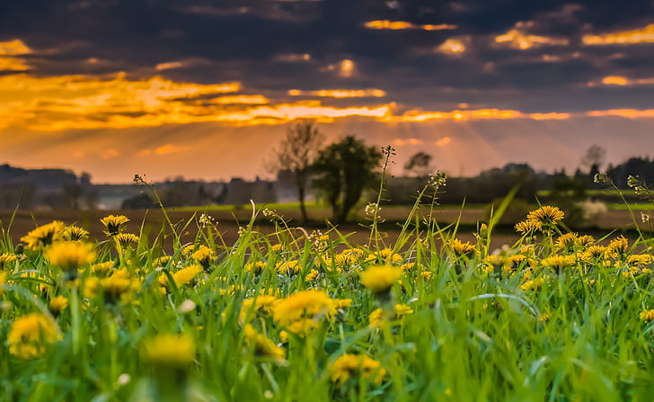 green grass and yellow flowers