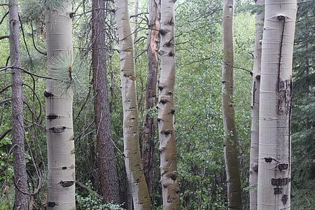 photo of gray tree trunks