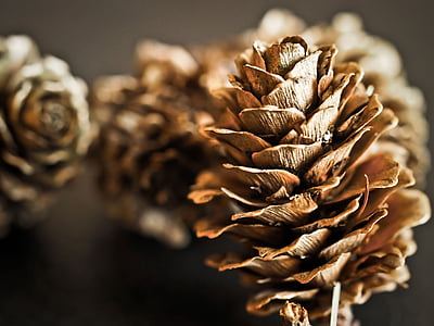 focus photography of pine cone