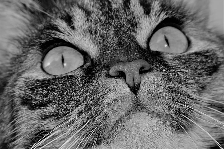 close-up photography of tabby cat