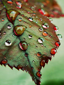 close up photography of green leaf with water dew