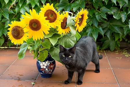 cat standing near sungflower