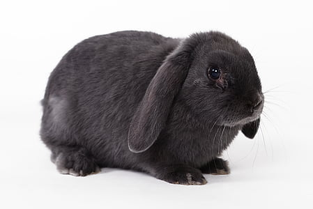 black rabbit on white surface